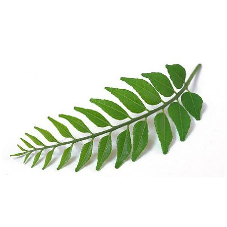 Image result for curry leaves